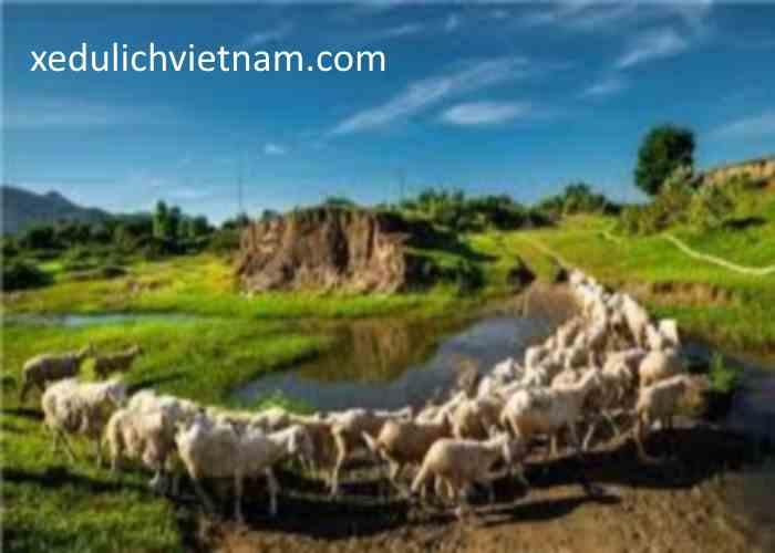 Thuê xe Sài Gòn đi Vũng Tau5